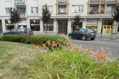 Žilinčanom prekážajú vyschnuté kvetinové záhony