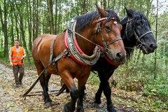 Poškodené stromy zvážajú kone
