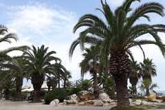 San Benedetto del Tronto – mesto tisícich paliem
