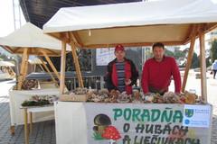 Rastie hríb satan v žilinskom regióne?