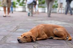 Túlavé psy budú fotografovať