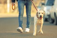 V Žiline rastie počet psov a s nimi aj zdravie ohrozujúce výkaly