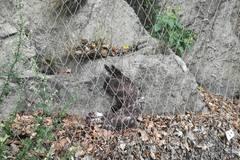 Uväznený dravec