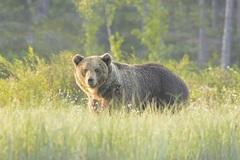 Po diviakoch vraj na Hájiku úraduje aj medveď! Máme sa báť?