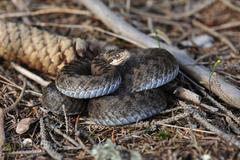 V Malej Fatre hrýzli hady