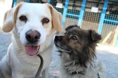 Žilinské útulky sú plné, obce im posielajú ďalších psov
