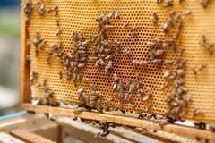 Prednáška: Včely a včelárstvo / Michal Butek