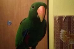 Stratil sa papagáj Shrek