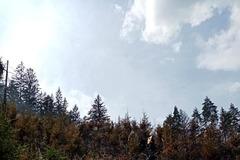 Veľké Rovné: Pri požiari lesného porastu zasahuje vyše 20 hasičov