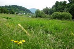 Vysoká tráva bráni prechádzkam okolo Kysuce