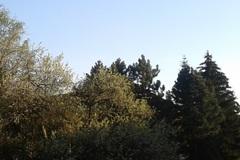 Dnešný deň patrí stromom