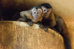 VMiniZOObude zas očosi veselšie, majú dve nové opičky