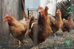Pre Hornú Tižinu a ďalšie terchovské osady platia až do odvolania prísne opatrenia v súvislosti s vtáčou chrípkou