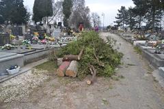 Príspevok čitateľa - Mestský cintorín