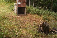 V Malej Fatre telemetrujú medvede