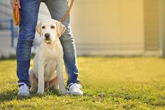 Mesto chce inštalovať toalety pre psov