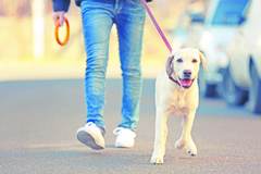 Varovný prst pre žilinských psičkárov: na Vlčincoch sa opäť stretli s otravami pre psov