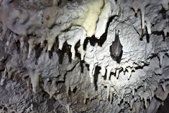 V Malej Fatre počítali netopiere