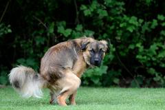 Sú v Kysuci potrebné koše na psie exkrementy?