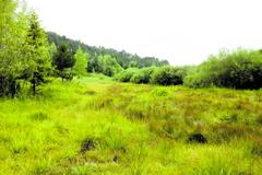 Na vzácnom rašelinisku rastie aj mäsožravá rastlina