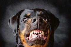 Na povel majiteľa dohrýzol pes manželov