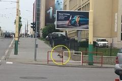 Do centra mesta sa zatúlal zranený srnec. Pravdepodobne ho zrazilo auto