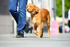 Návnady pre psov sú v Žiline strašiakom: ako ich chrániť?