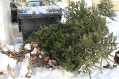 Neviete, čo s vianočným stromčekom? Mesto ho ekologicky spracuje