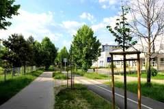 Na Solinkách vysadia 245 stromov