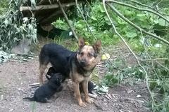 O odvrhnuté psíky sa postarajú dedinčania
